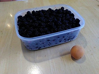 blackberries/damesnet