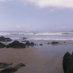 The sea the sea